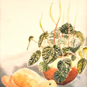Pepperomia